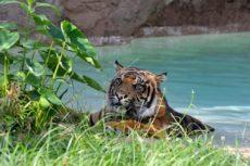 Tigre Bioparco di Roma - Foto di Massimiliano Di Giovanni