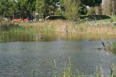 Stagno - Parco Canale dello Stagno - Foto di www.insiemeperlosport.it