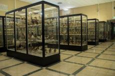 Sale Arrigoni degli Oddi - Museo Civico di Zoologia