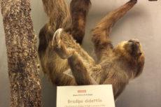 Sale dei mammiferi - Museo Civico di Zoologia