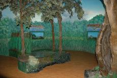 Zone umide del Lazio - Museo Civico di Zoologia