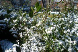 I Rondò - Casal Palocco neve 2012