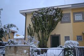 Casal Palocco neve 2012