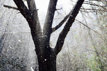 La neve del 2018 - La Pineta