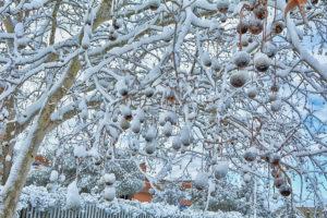 La neve del 2018 - Acilia