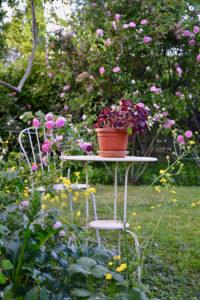 Giardino-delle-rose-La-Fortuniana-2